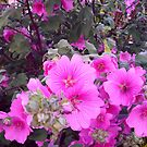 Bright Pink Flowers by GImages