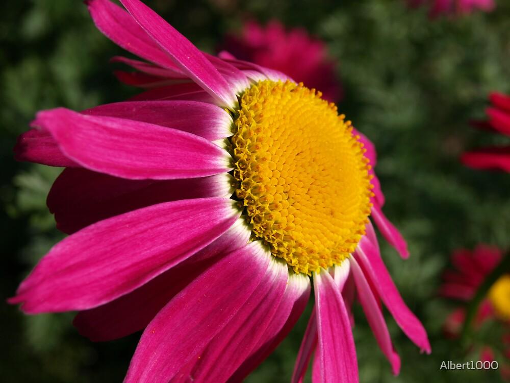 NC Nice flower by Albert1000