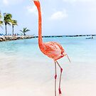 Flamingle  by Southern  Departure
