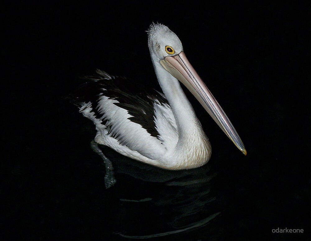 Pelican At Night by odarkeone