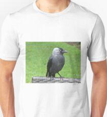 A friendly Jackdaw T-Shirt