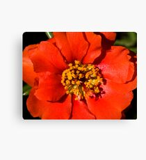 Flower macro Canvas Print