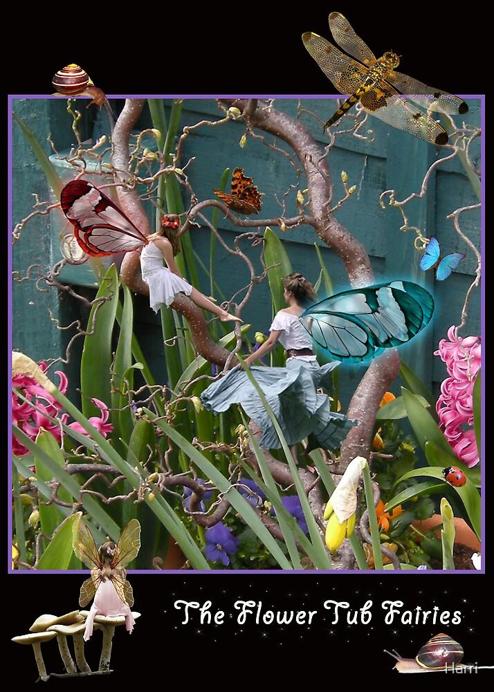The Flower Tub Fairies by Harri