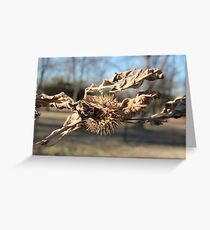 Dried bloom Greeting Card