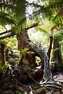 The Rainforest Floor, Maits Rest, Victoria by Christine Smith