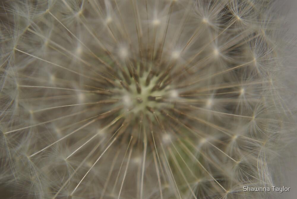 Dandilion Seed head by Shawnna Taylor