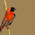 Early Bird....... by Macky