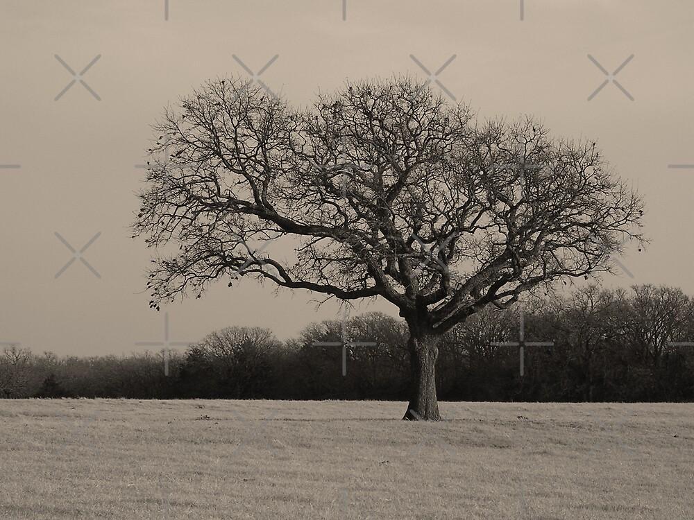 Lonley Tree by Mark Rogers