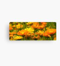Backyard Wild Flowers Canvas Print