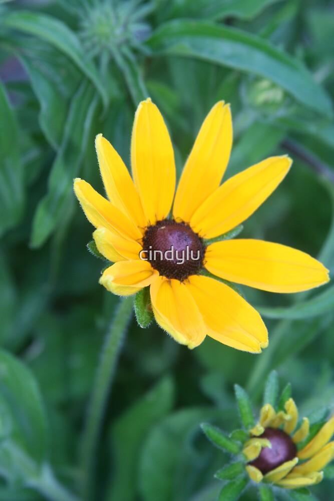 Yellow by cindylu
