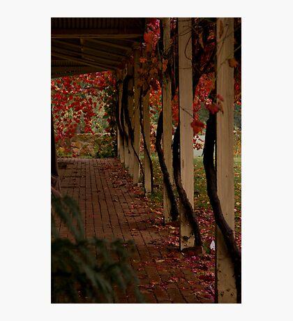 Vine Lines Photographic Print
