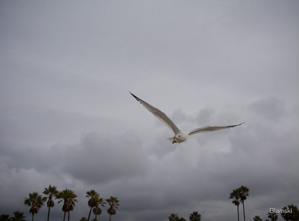 Gull by Blamski