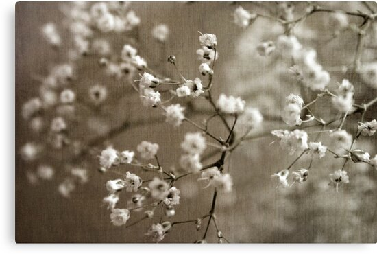 Soft Breath by sandra arduini