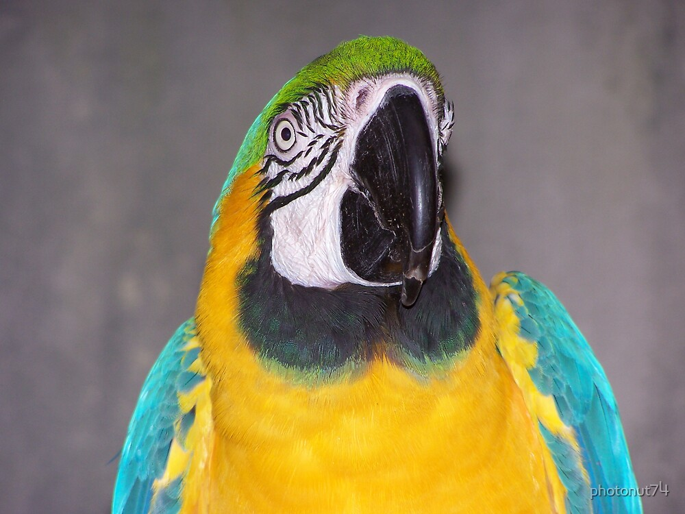 Parrot in sight by photonut74