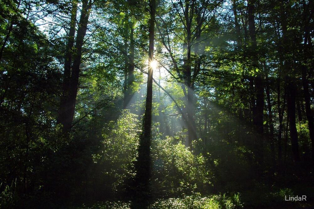 Good Morning Light... by LindaR