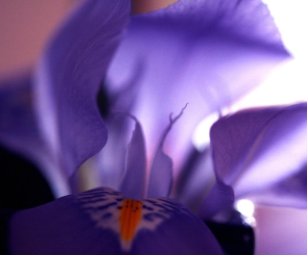 winter iris by JulesVandermaat