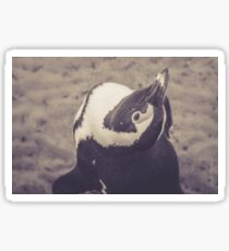 Adorable African Penguin Series 1 of 4 Sticker