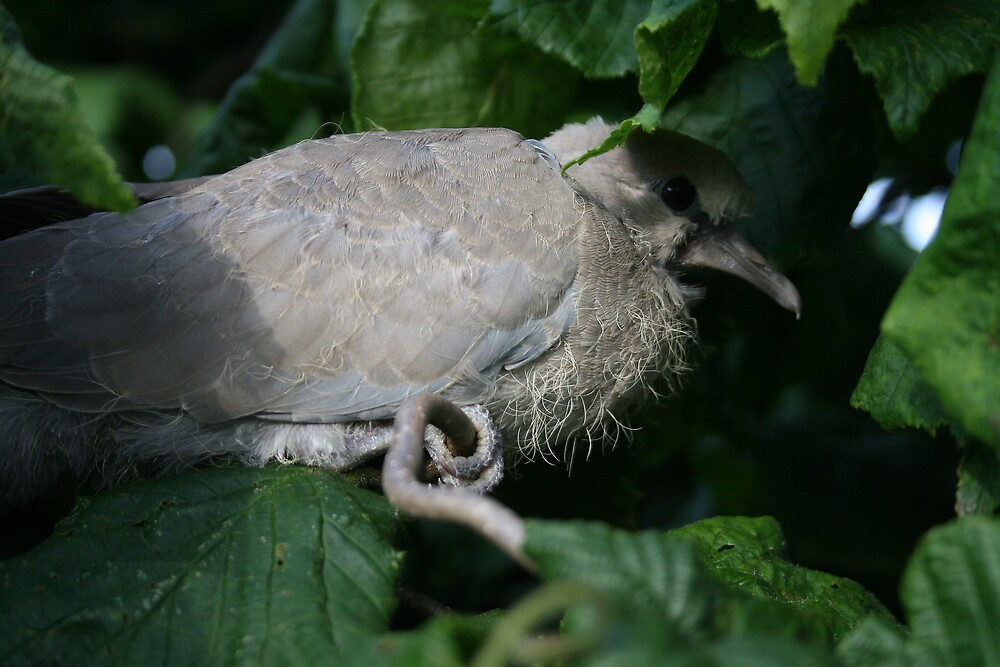 First fledge by Robert Deaton