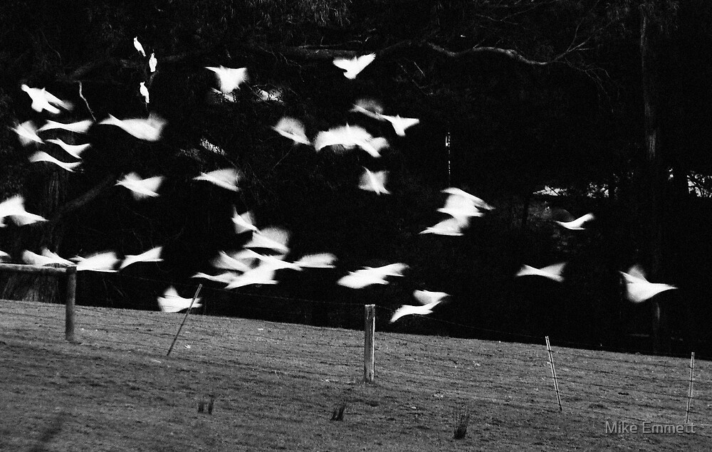 The Birds by Mike Emmett