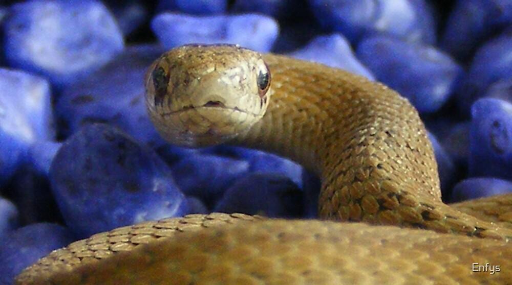 Garter snake by Enfys