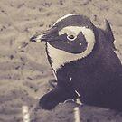 Adorable African Penguin Series 2 of 4 by lightwanderer