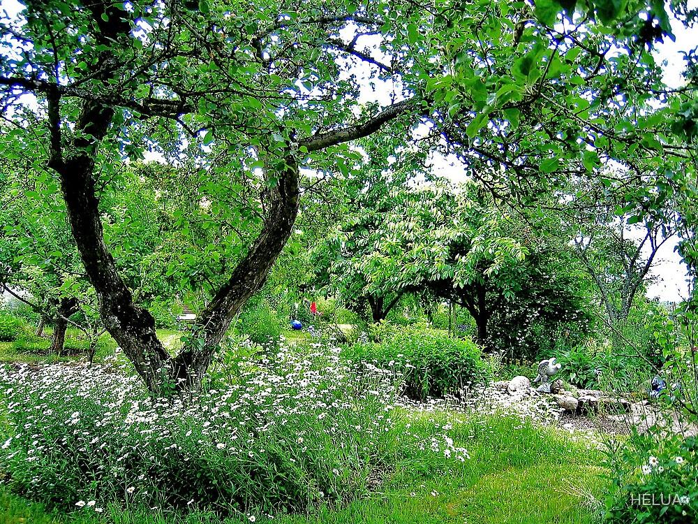 """""""The Garden"""" by HELUA"""
