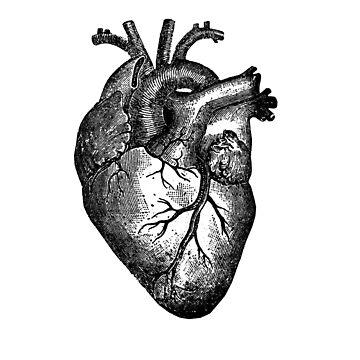 PHD Heart Throb by Katelizabethan