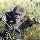 Gorilla Grass by ApeArt
