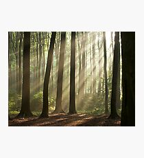 Sun rays in morning forest Photographic Print