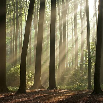 Sun rays in morning forest by MikLav