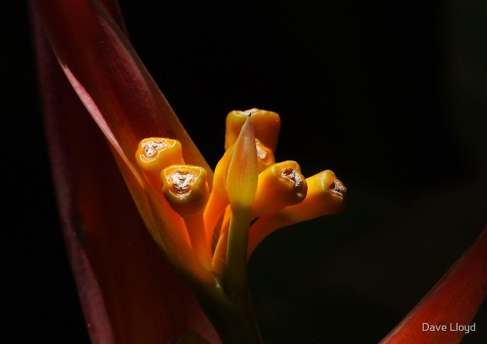 Buds by Dave Lloyd