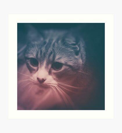 photo cat Stefan #photo #cat Art Print