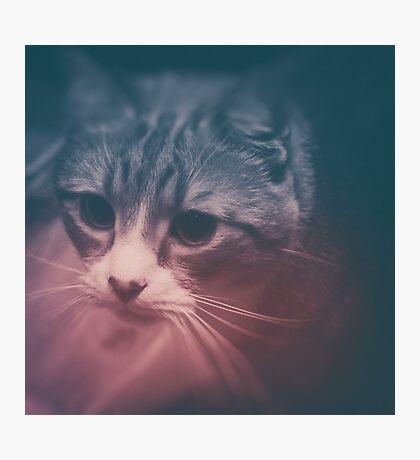 photo cat Stefan #photo #cat Photographic Print