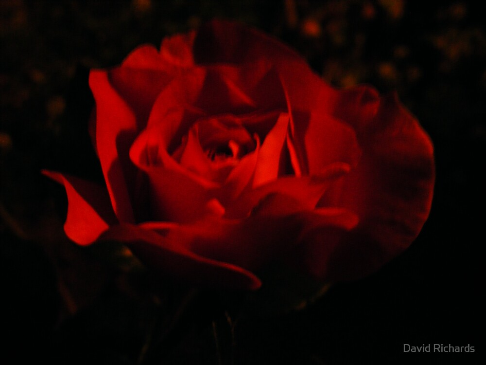 Red Velvet by David Richards