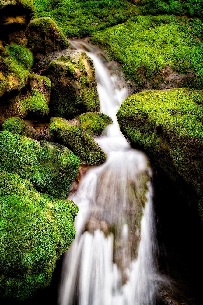 Moss Falls by Scott Ward
