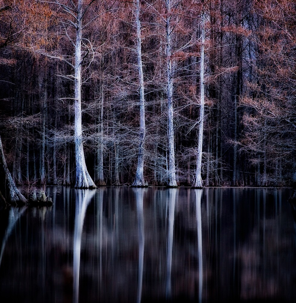 Reflection by Scott Ward