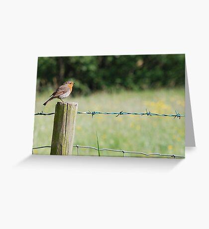 robin in farndale Greeting Card