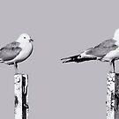 Gulls by Matti Ollikainen