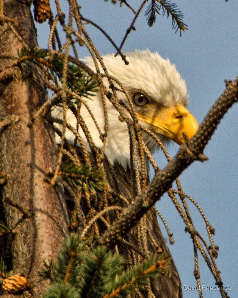 I Can See You by David Friederich