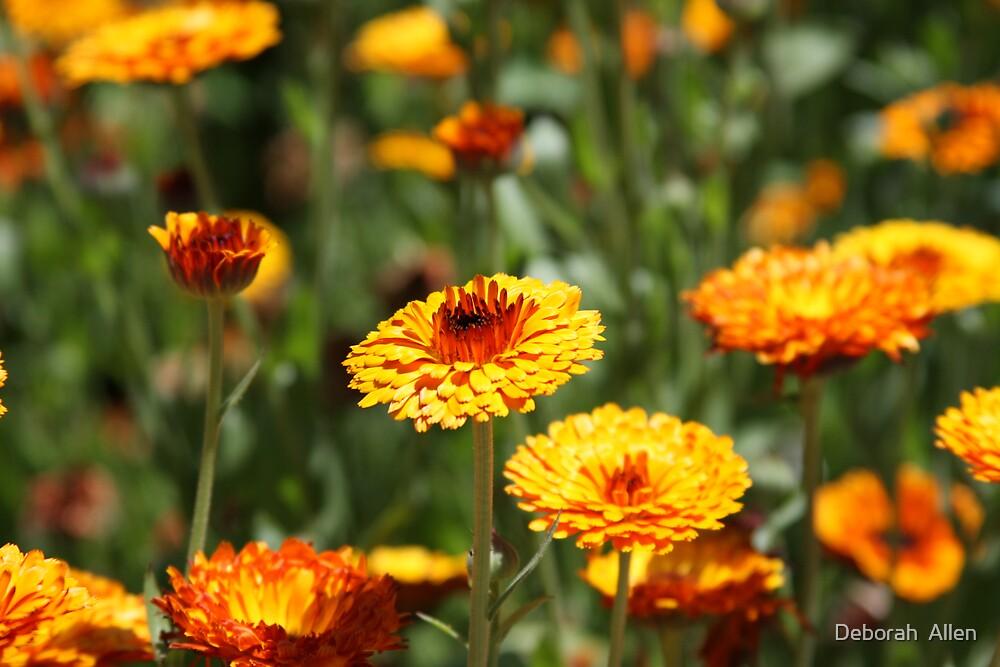 Hot Orange Flowers by Deborah  Allen