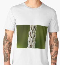Flowers of a white asphodel (Asphodelus albus) Men's Premium T-Shirt