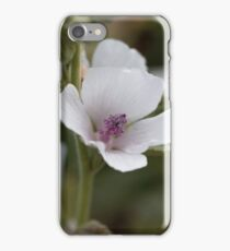 Flower of a Common marsh mallow, Althaea officinalis. iPhone Case/Skin