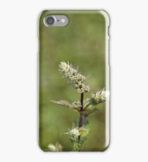 Flowers of a peppermint plant, Mentha x piperita iPhone Case/Skin
