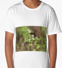 Flowers of a peppermint plant, Mentha x piperita, in a field. Long T-Shirt