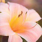 Delightful Daylily by Anita Pollak