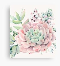Pretty Succulents Pink and Green Desert Succulent Illustration Canvas Print