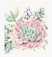 Pretty Succulents Pink and Green Desert Succulent Illustration Photographic Print