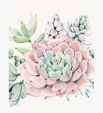 Hübsche Succulents-rosa und grüne Wüste Succulent Illustration Fotodruck