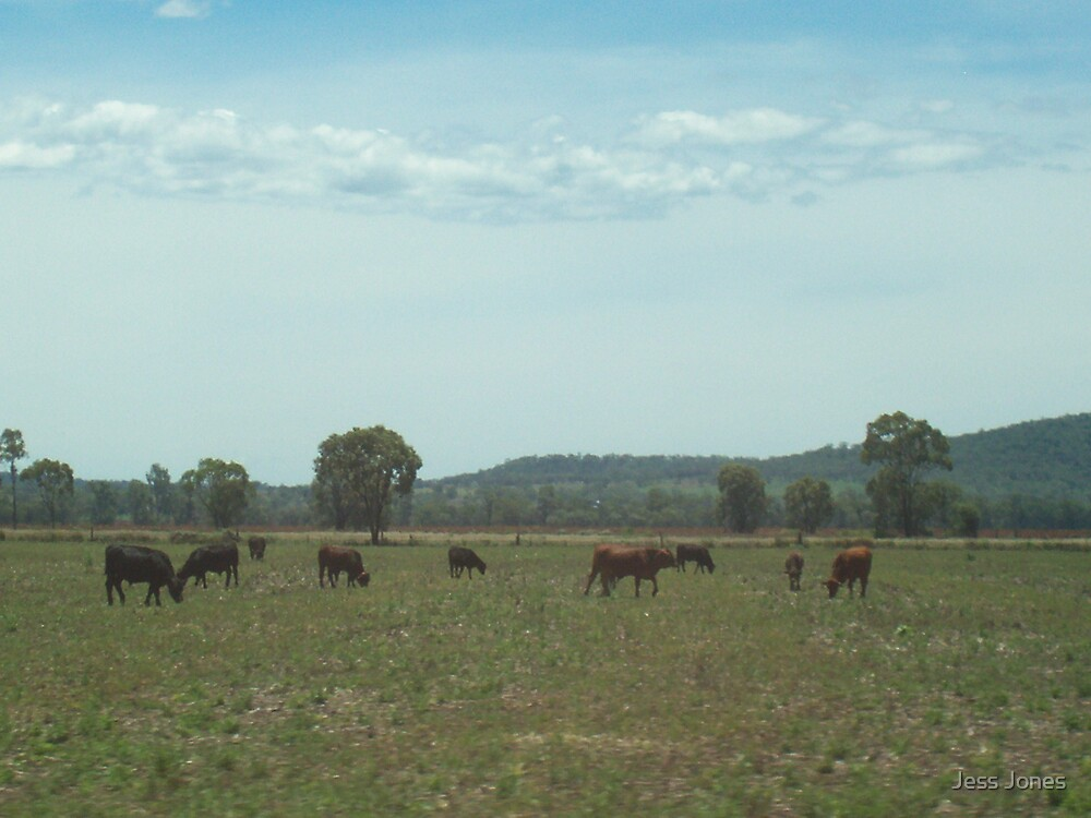 Cattle Field by Jess Jones