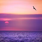 Pelican Sunset by Marie Sharp